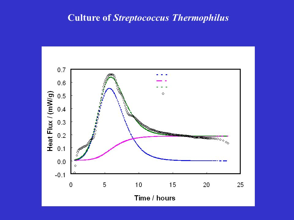 Culture of Streptococcus Thermophilus