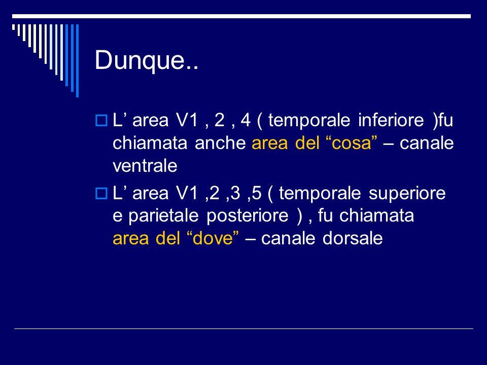 Dunque..L' area V1 , 2 , 4 ( temporale inferiore )fu chiamata anche area del cosa – canale ventrale.