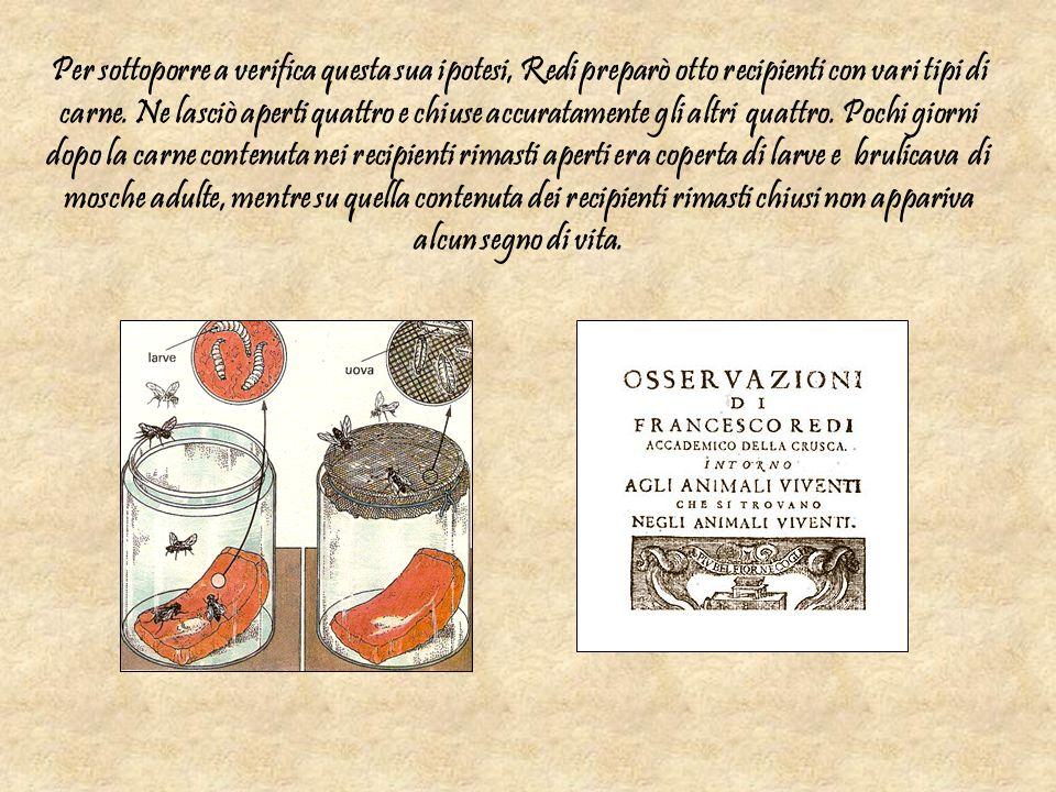 Per sottoporre a verifica questa sua ipotesi, Redi preparò otto recipienti con vari tipi di carne.