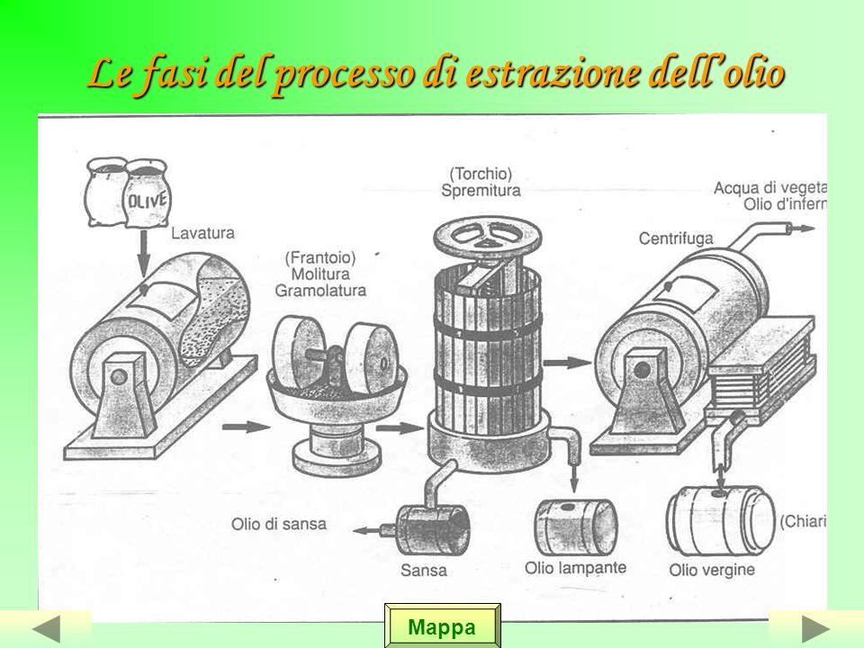Le fasi del processo di estrazione dell'olio