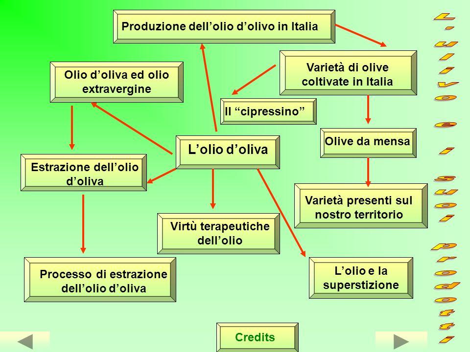L ulivo e i suoi prodotti