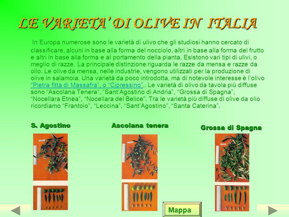 LE VARIETA' DI OLIVE IN ITALIA