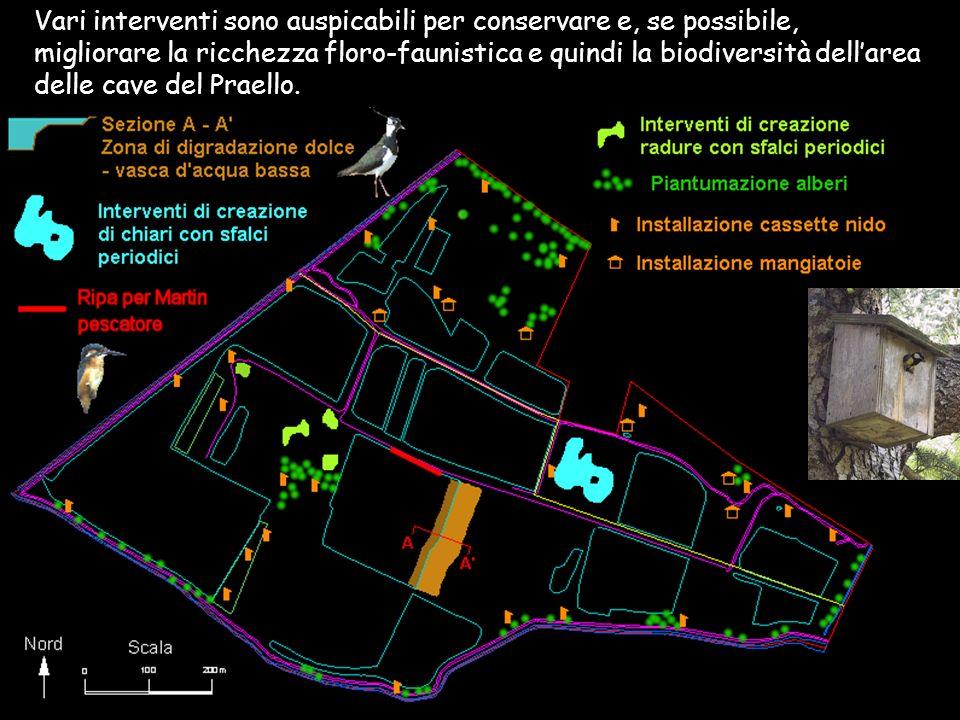 Vari interventi sono auspicabili per conservare e, se possibile, migliorare la ricchezza floro-faunistica e quindi la biodiversità dell'area delle cave del Praello.