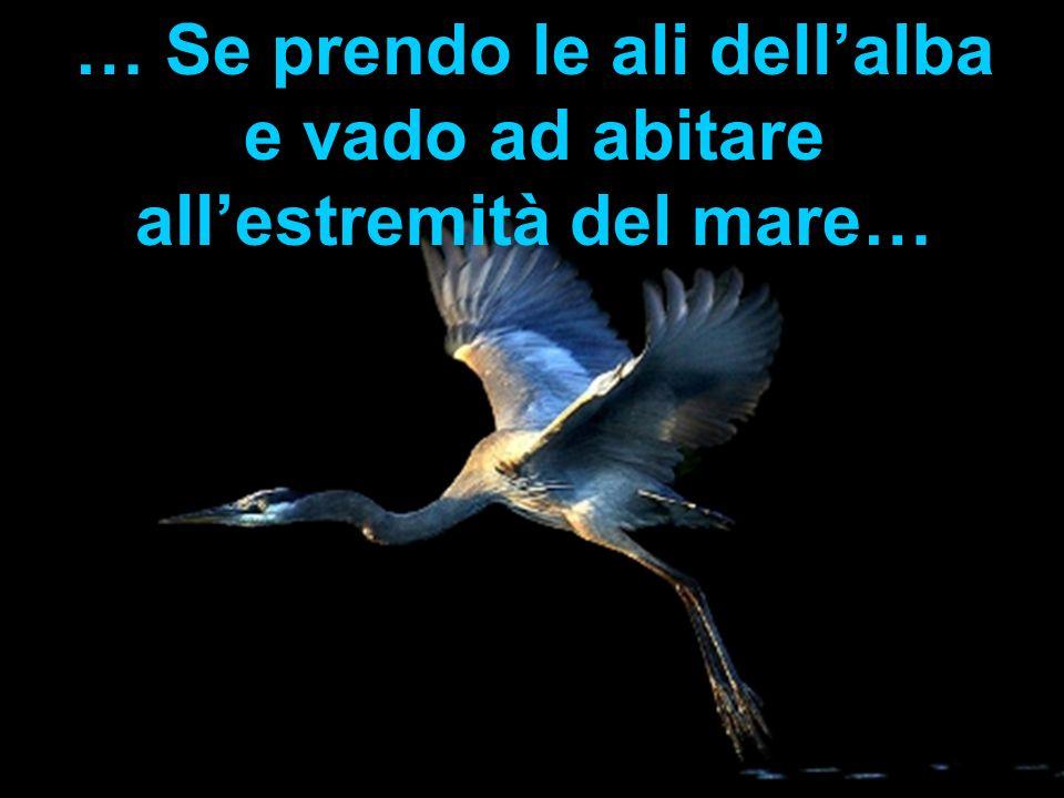 … Se prendo le ali dell'alba e vado ad abitare all'estremità del mare…