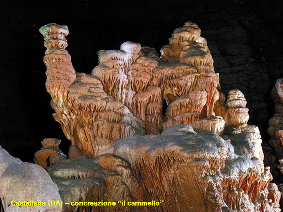 Castellana (BA) – concreazione il cammello