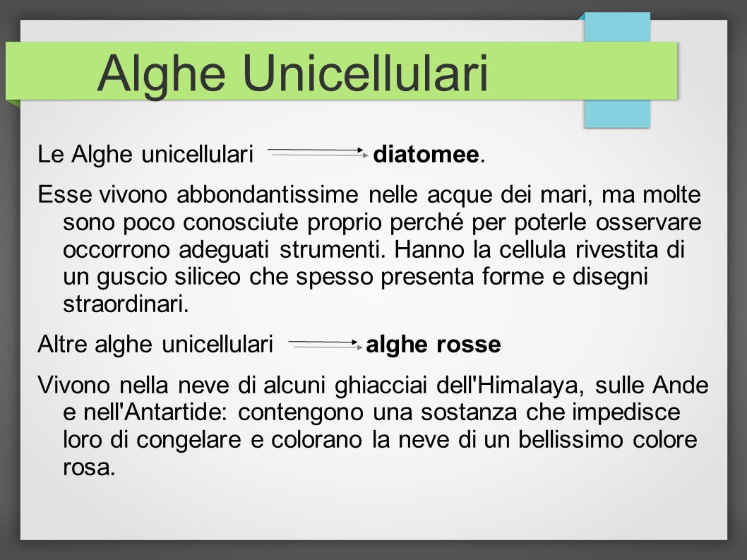 Alghe Unicellulari Le Alghe unicellulari diatomee.