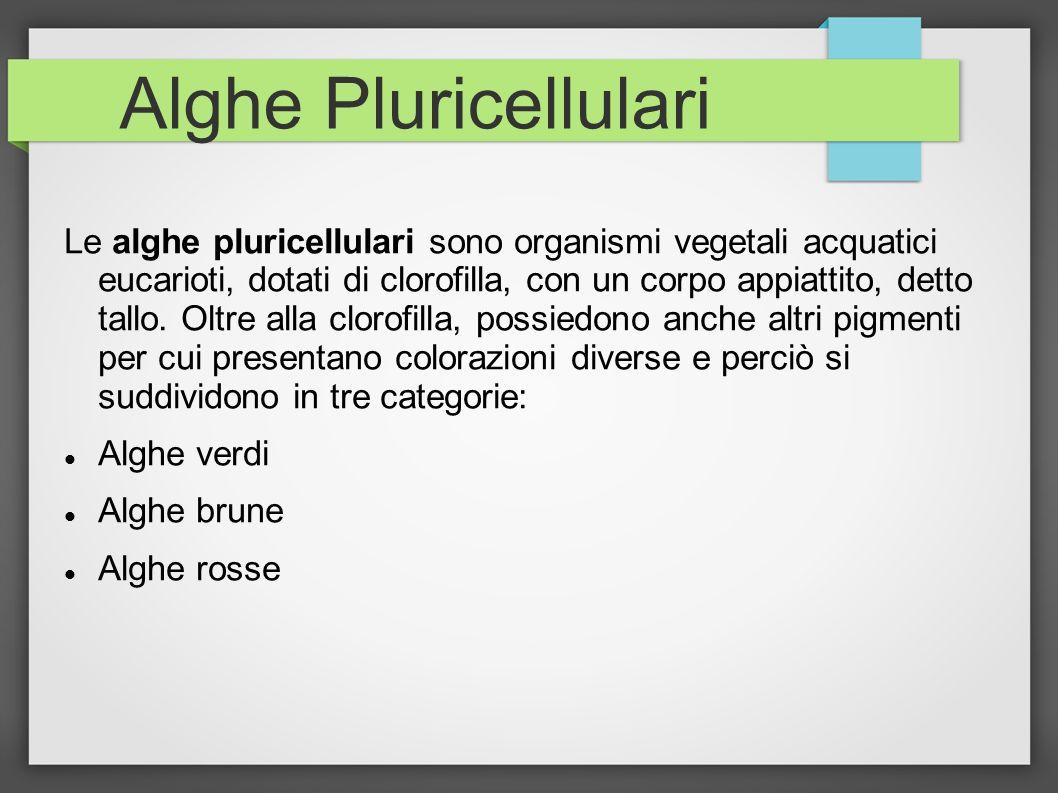 Alghe Pluricellulari
