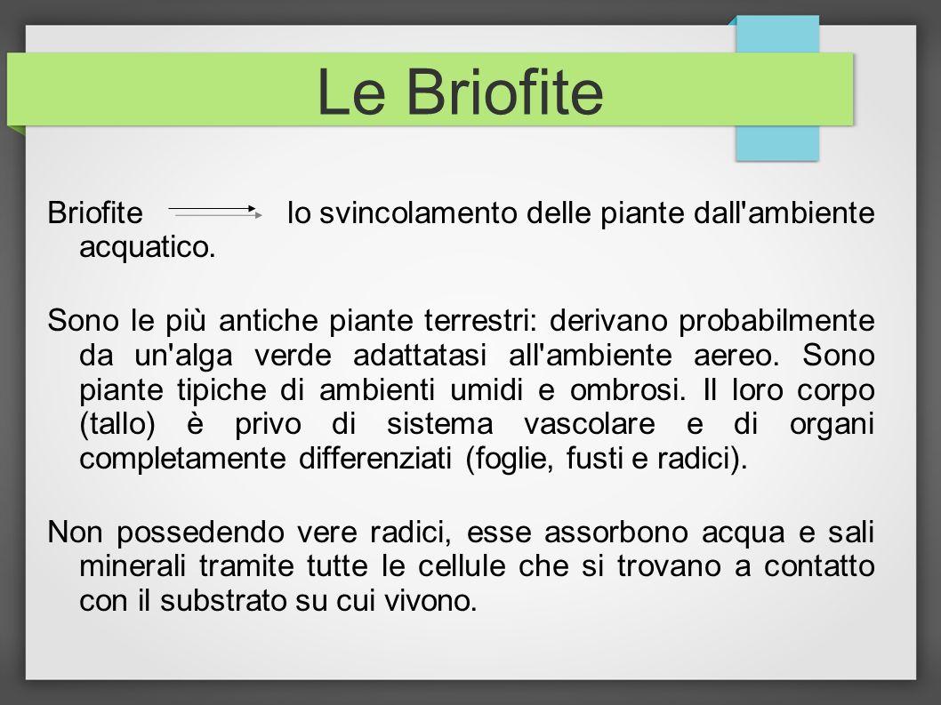 Le Briofite Briofite lo svincolamento delle piante dall ambiente acquatico.
