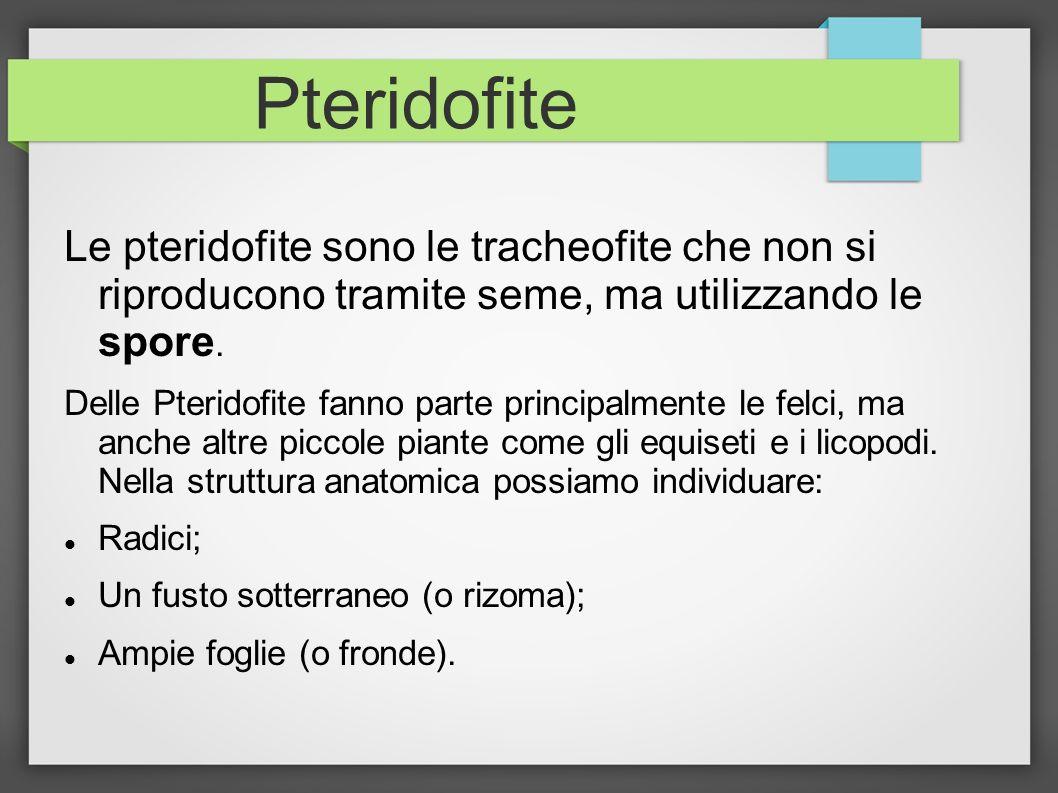 Pteridofite Le pteridofite sono le tracheofite che non si riproducono tramite seme, ma utilizzando le spore.
