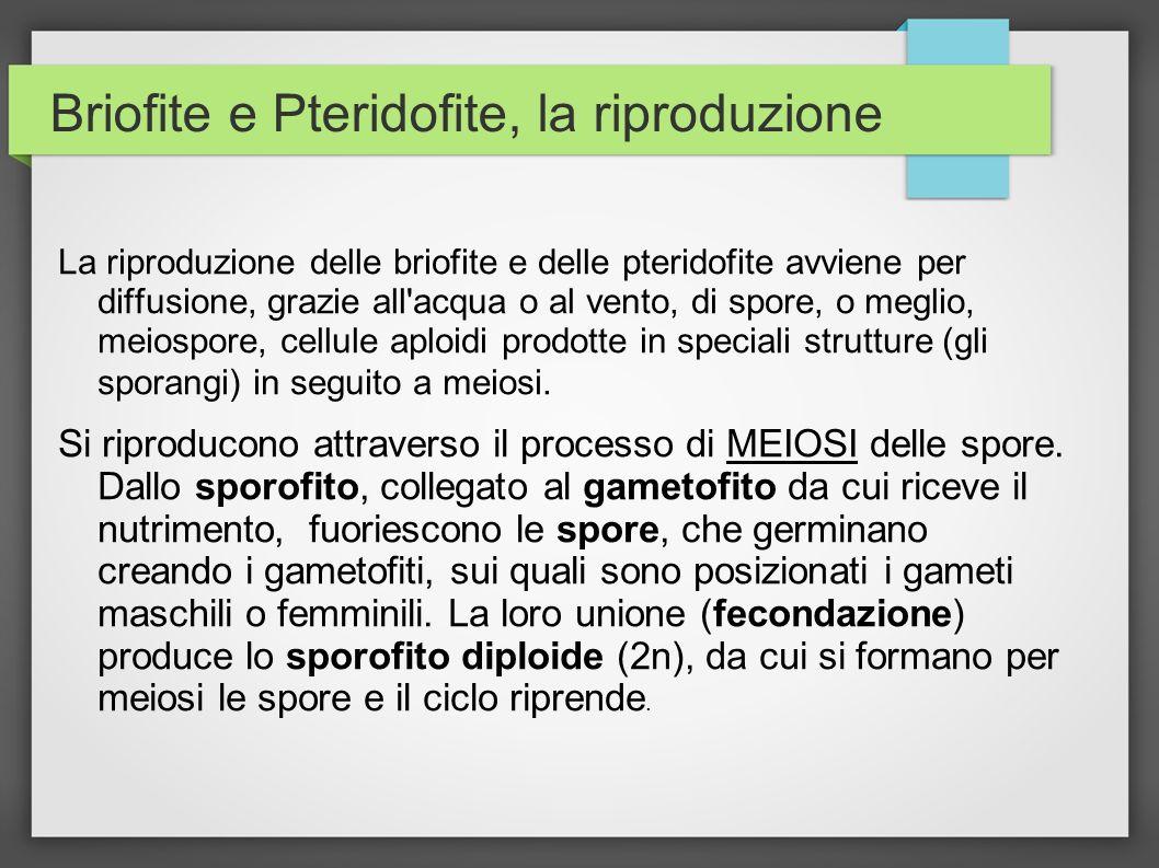Briofite e Pteridofite, la riproduzione