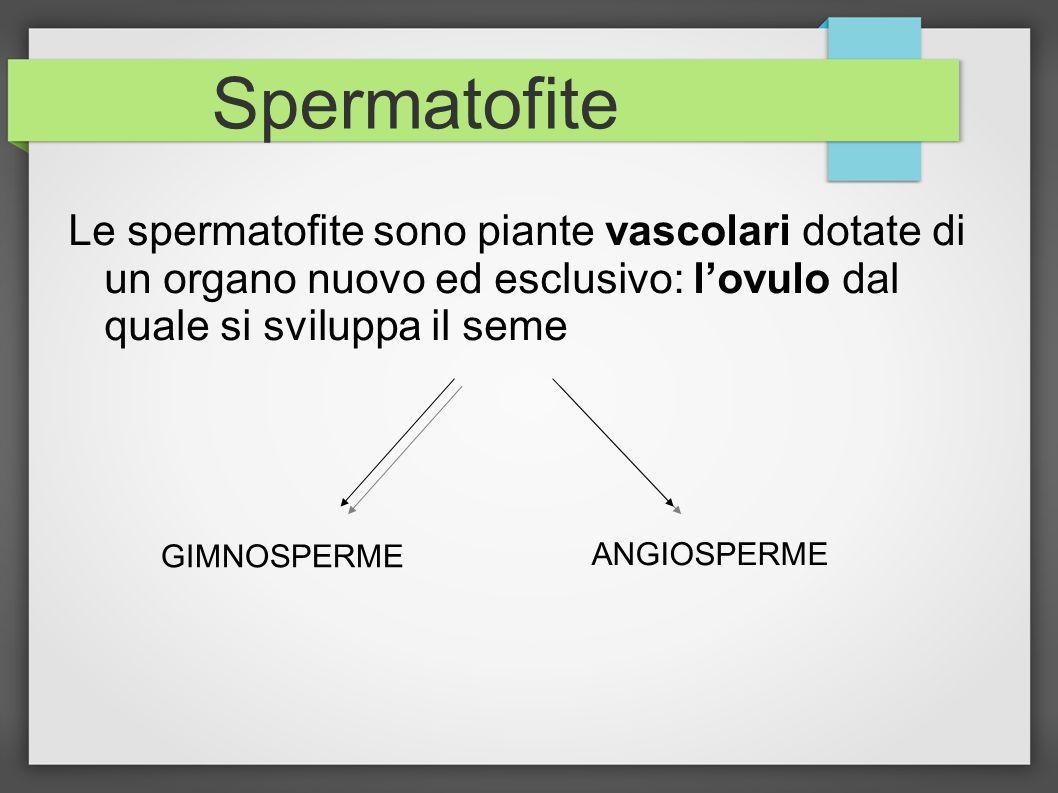 Spermatofite Le spermatofite sono piante vascolari dotate di un organo nuovo ed esclusivo: l'ovulo dal quale si sviluppa il seme.