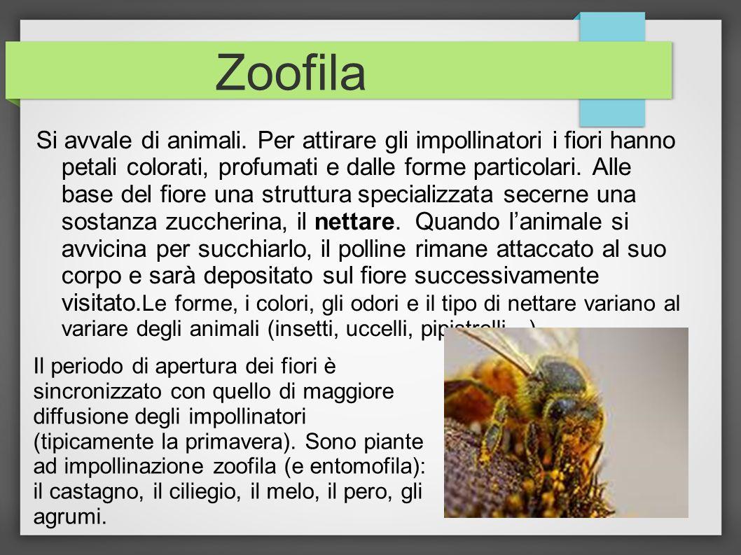 Zoofila