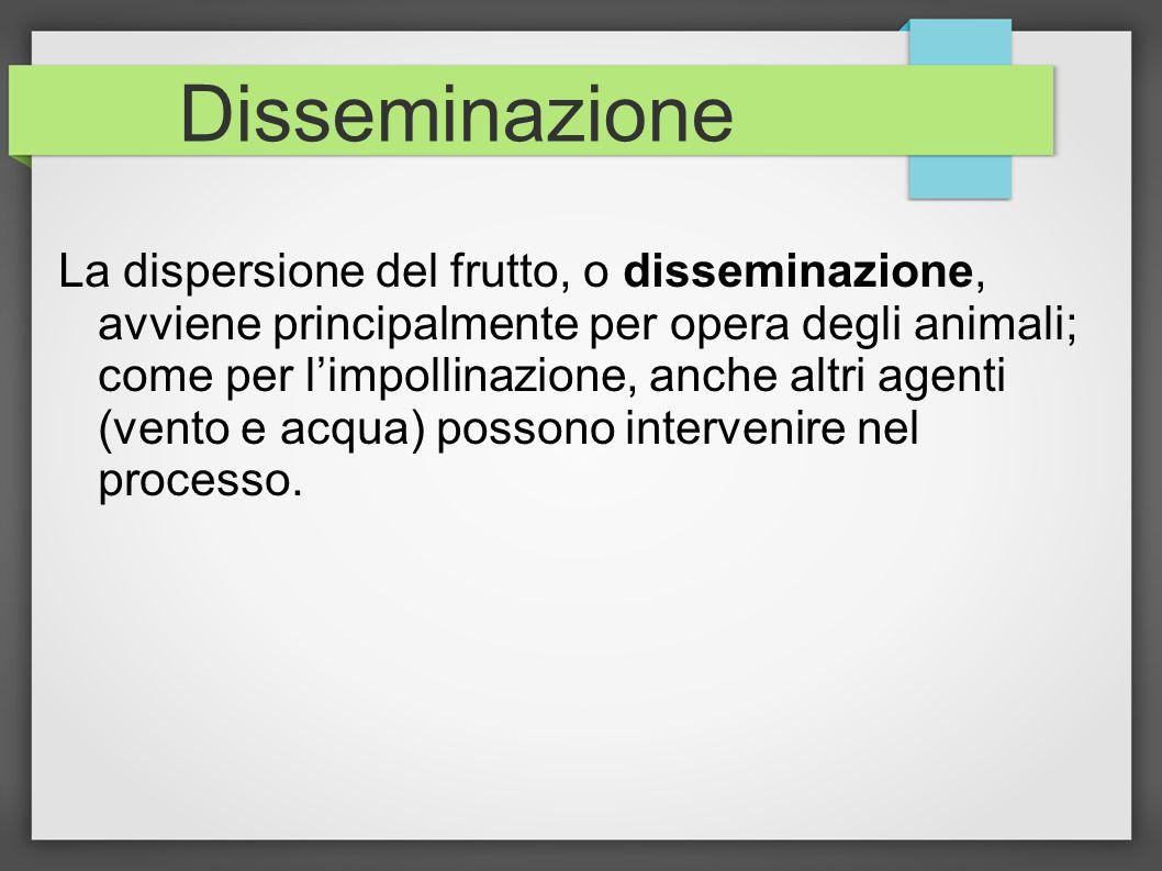 Disseminazione