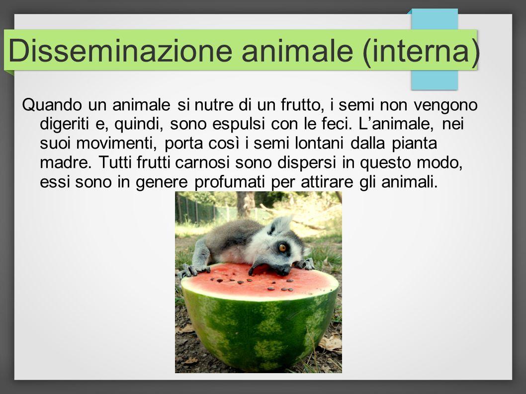 Disseminazione animale (interna)