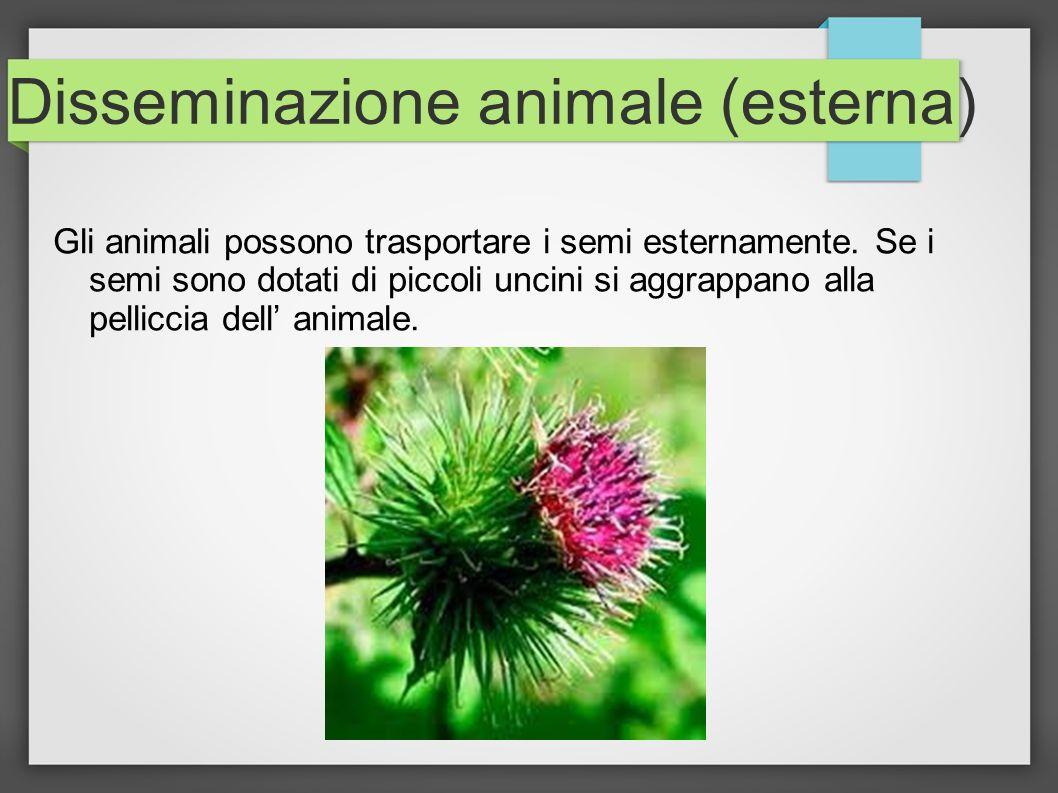 Disseminazione animale (esterna)