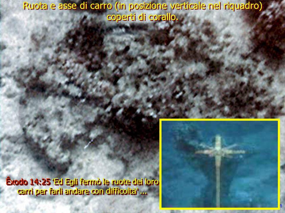 Ruota e asse di carro (in posizione verticale nel riquadro) coperti di corallo.