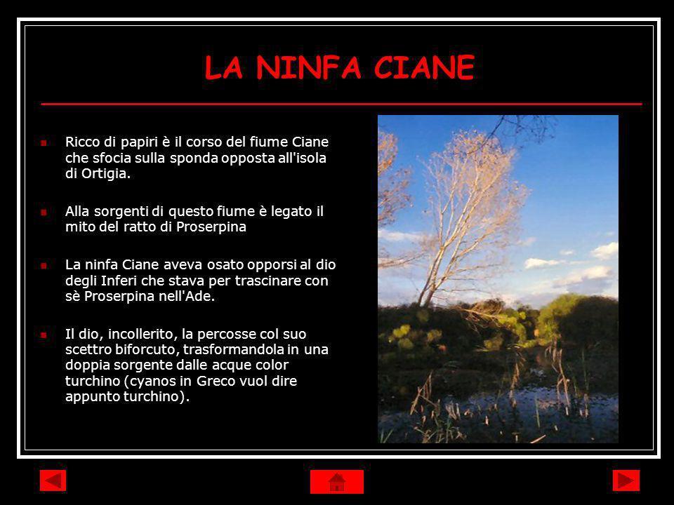 LA NINFA CIANE Ricco di papiri è il corso del fiume Ciane che sfocia sulla sponda opposta all isola di Ortigia.