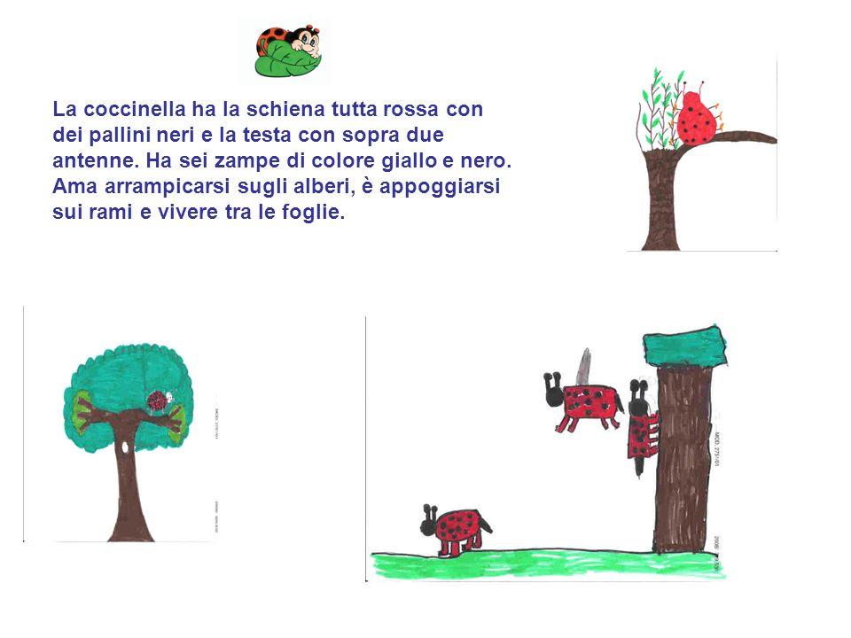 La coccinella ha la schiena tutta rossa con dei pallini neri e la testa con sopra due antenne.