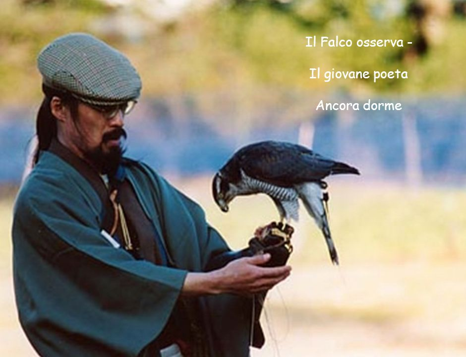 Il Falco osserva - Il giovane poeta Ancora dorme