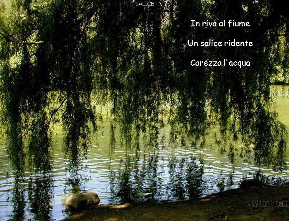 In riva al fiume Un salice ridente Carezza l acqua