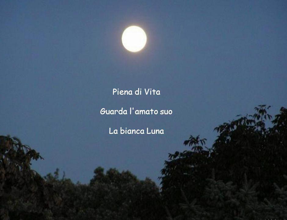 Piena di Vita Guarda l amato suo La bianca Luna