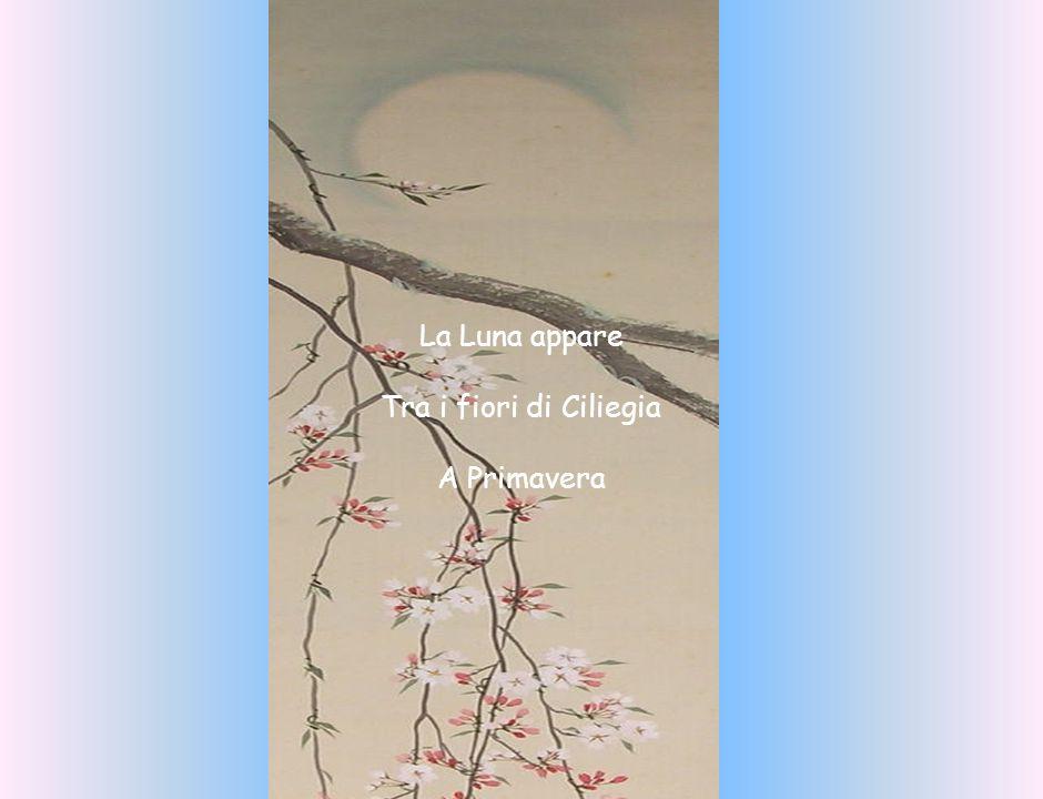 La Luna appare Tra i fiori di Ciliegia A Primavera