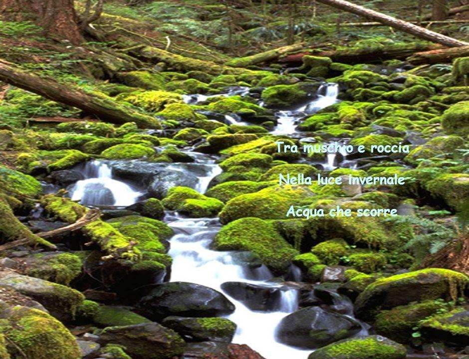Tra muschio e roccia Nella luce invernale Acqua che scorre