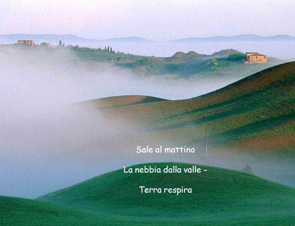Sale al mattino La nebbia dalla valle - Terra respira