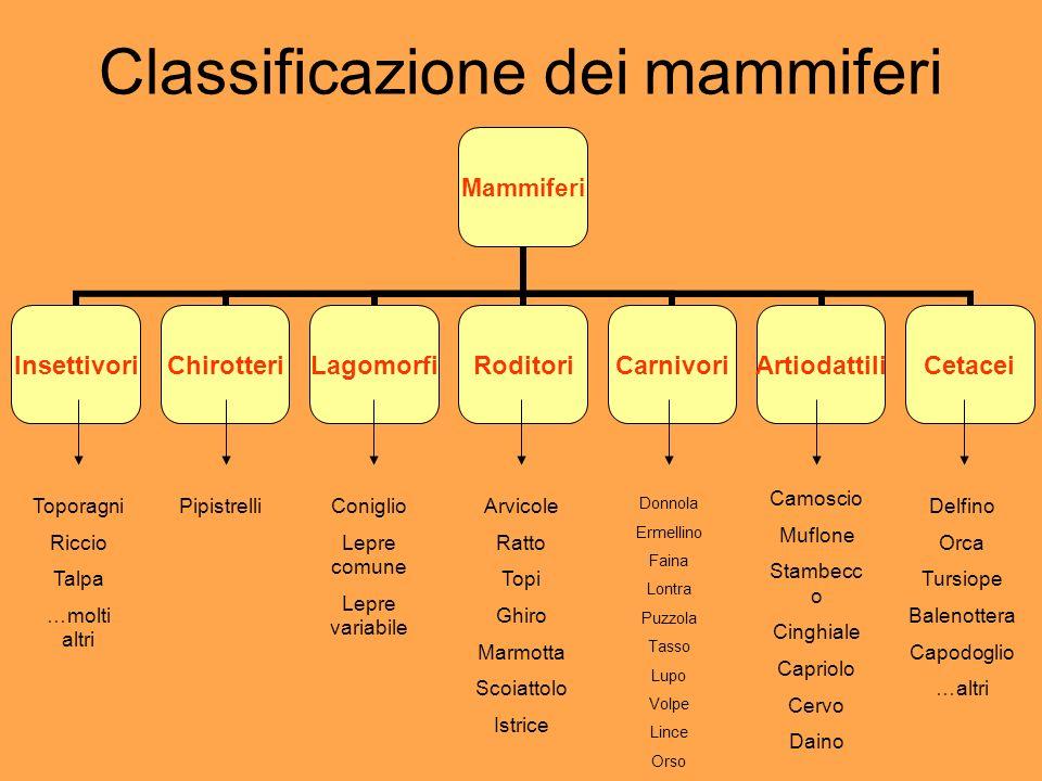 Classificazione dei mammiferi