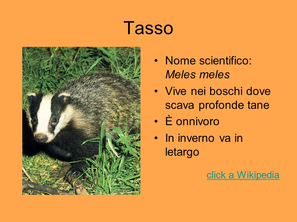 Tasso Nome scientifico: Meles meles