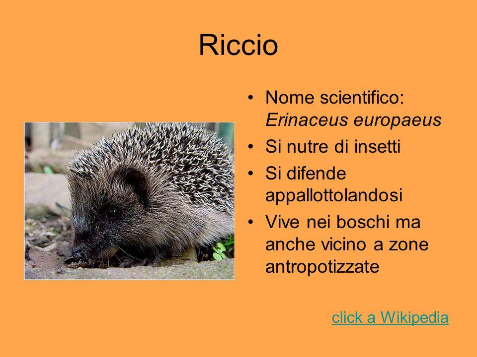 Riccio Nome scientifico: Erinaceus europaeus Si nutre di insetti