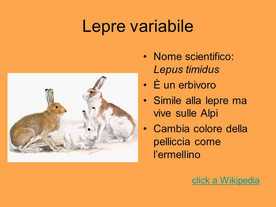 Lepre variabile Nome scientifico: Lepus timidus È un erbivoro