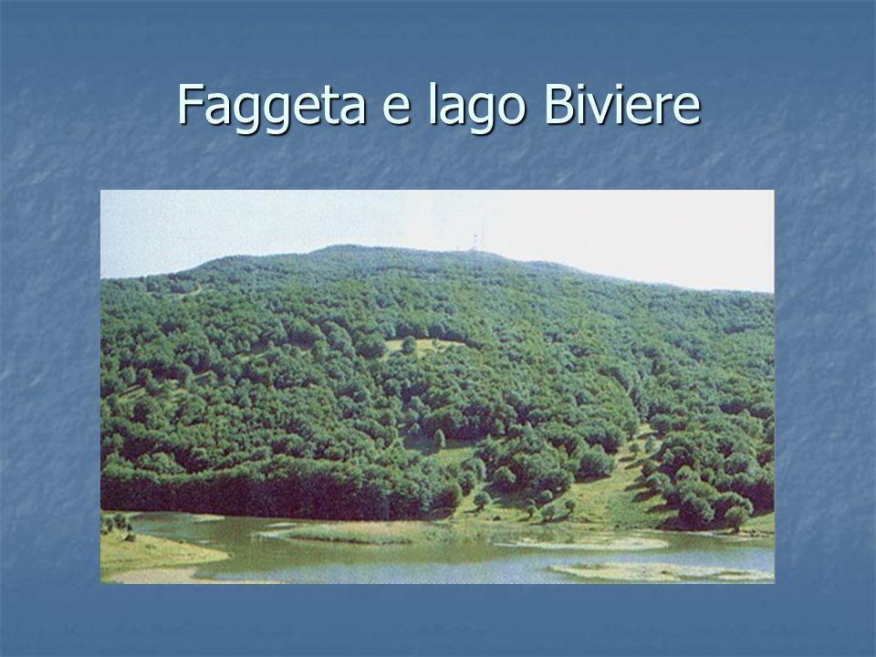 Faggeta e lago Biviere