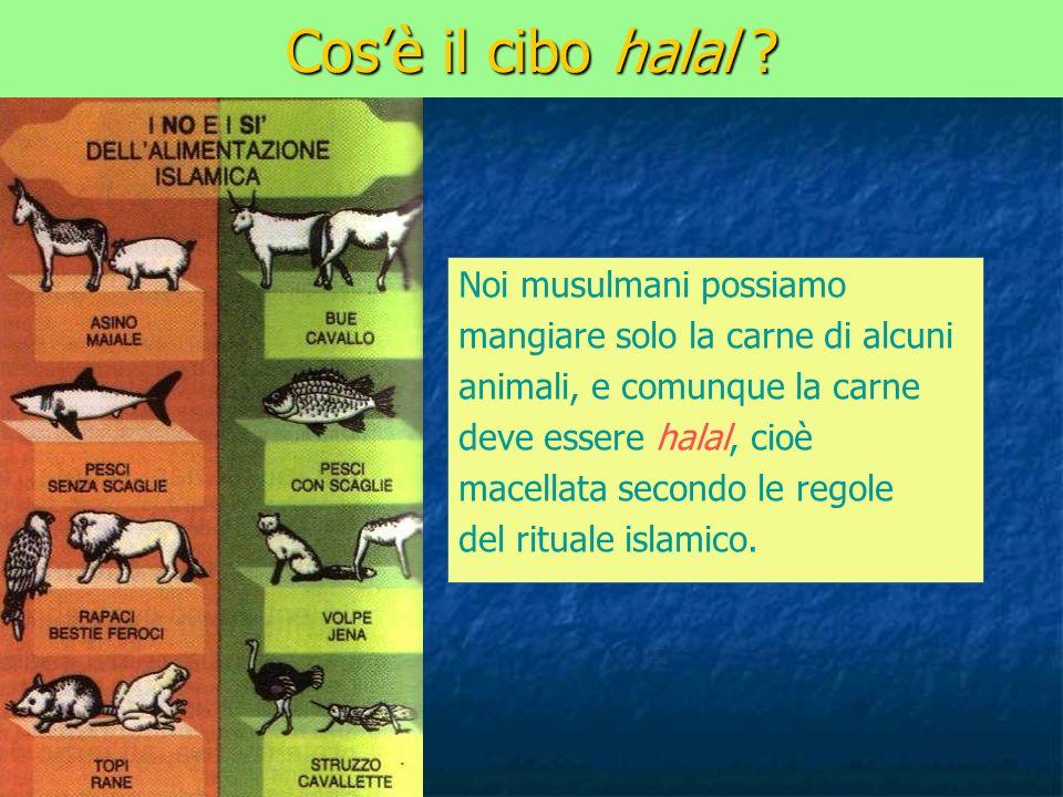 Cos'è il cibo halal Noi musulmani possiamo