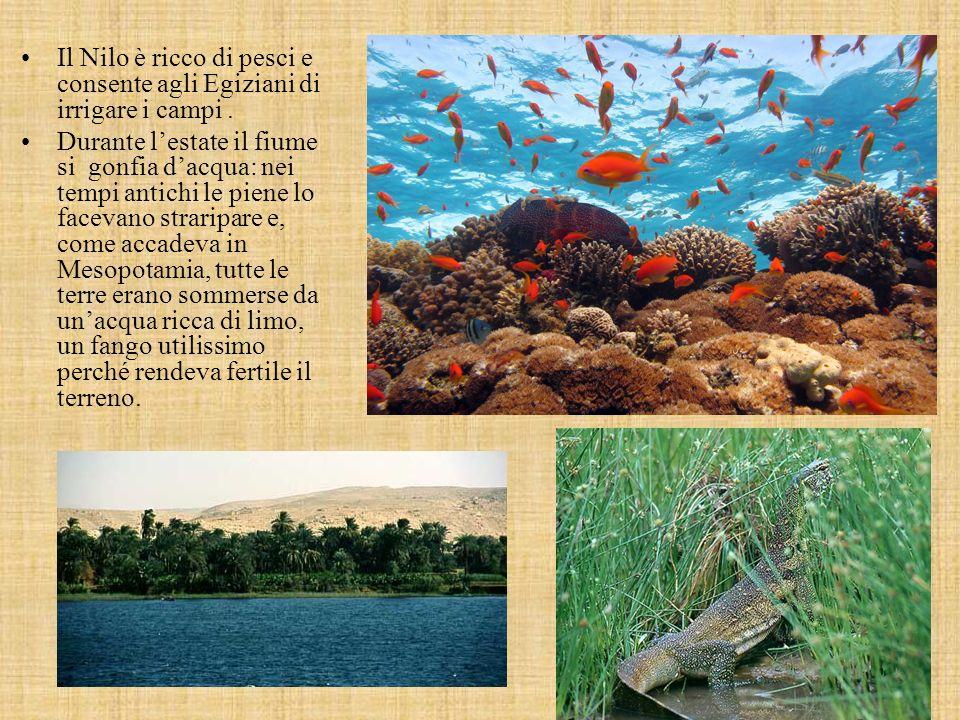 Il Nilo è ricco di pesci e consente agli Egiziani di irrigare i campi .