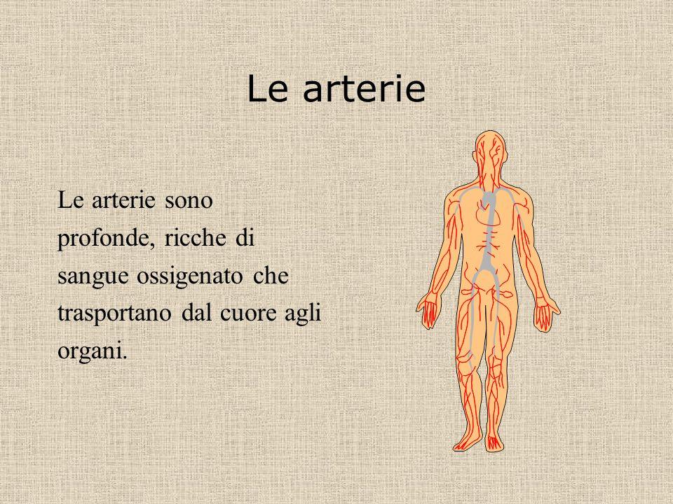 Le arterie Le arterie sono profonde, ricche di sangue ossigenato che
