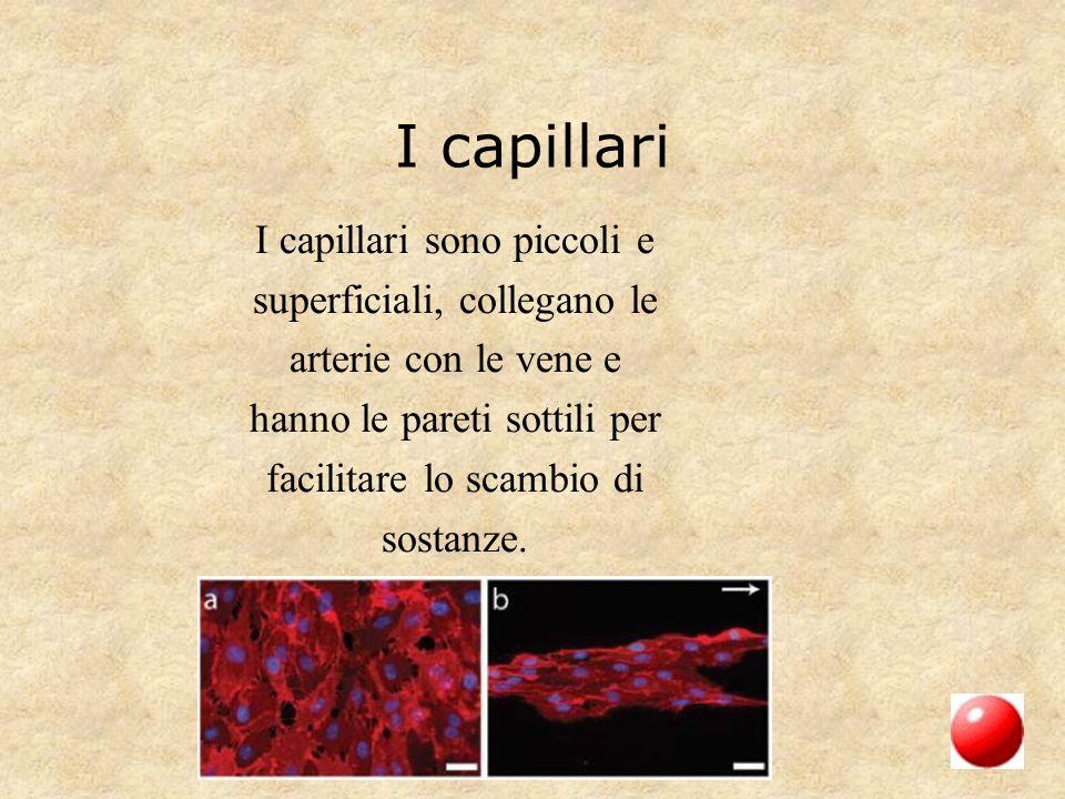 I capillari I capillari sono piccoli e superficiali, collegano le