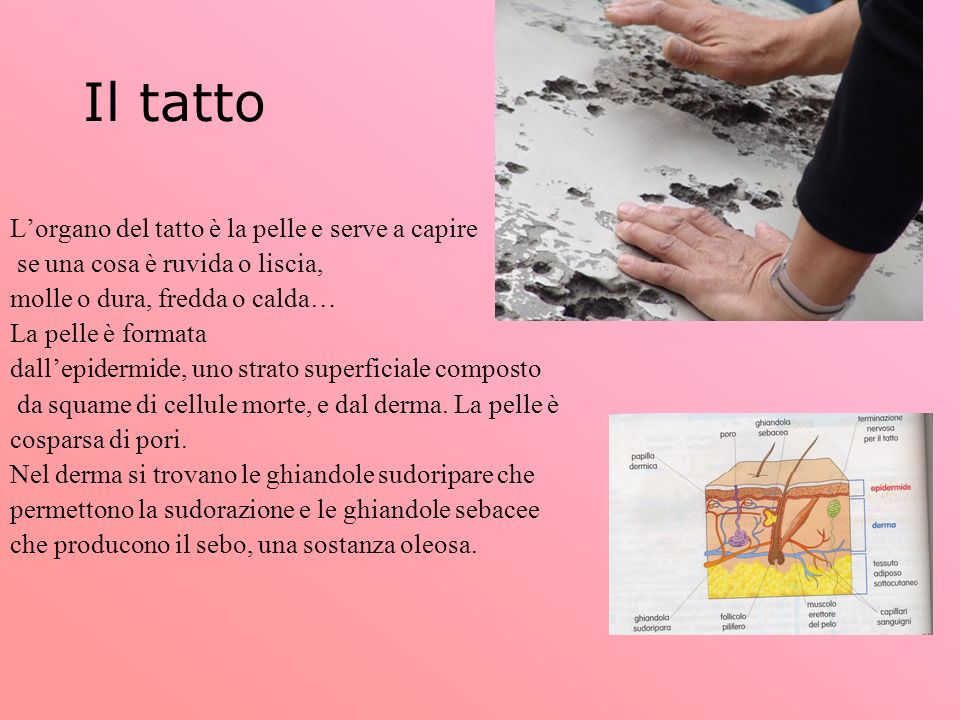 Il tatto L'organo del tatto è la pelle e serve a capire