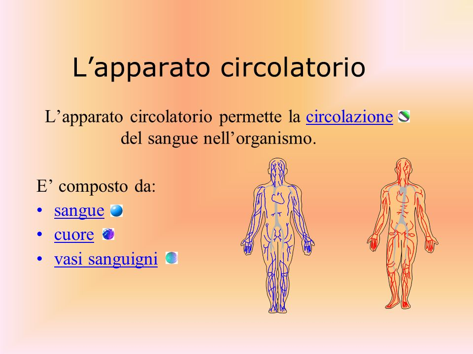 L'apparato circolatorio L'apparato circolatorio permette la circolazione del sangue nell'organismo.