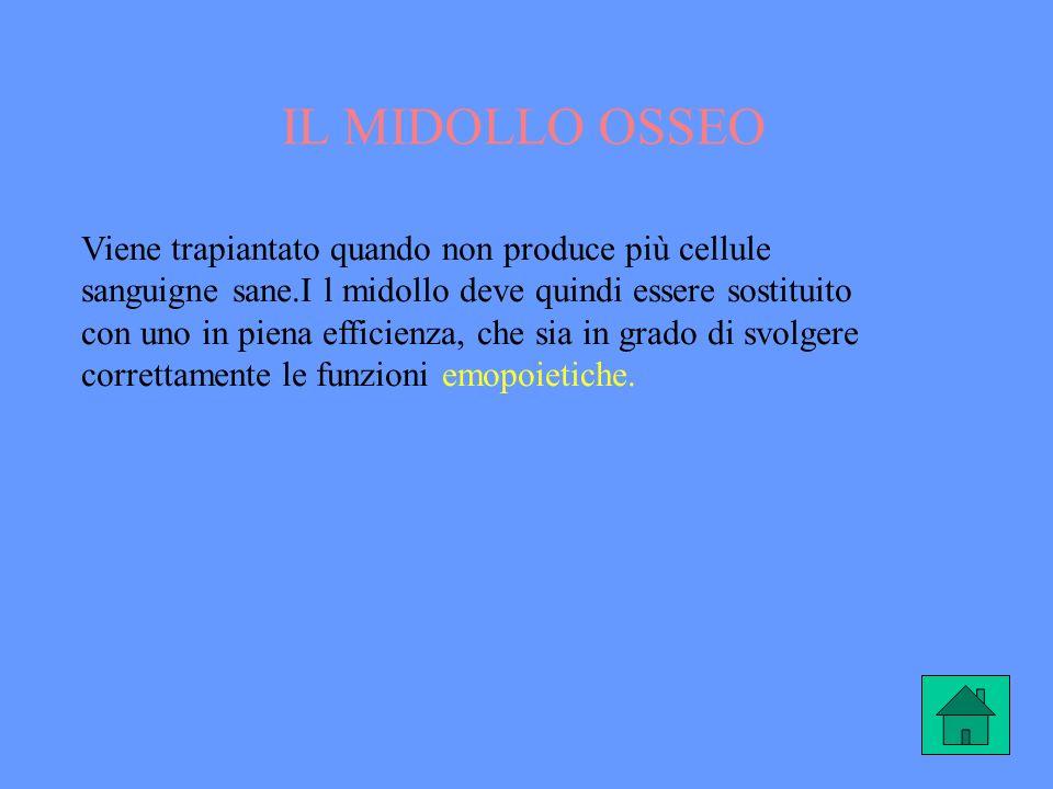 IL MIDOLLO OSSEO