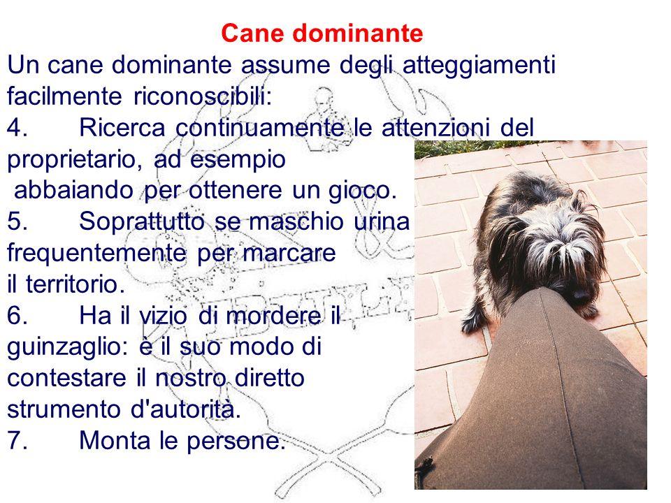 Cane dominante Un cane dominante assume degli atteggiamenti facilmente riconoscibili: