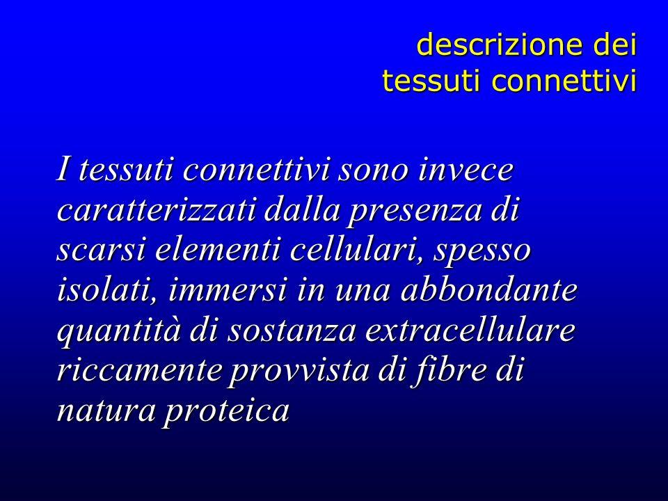 descrizione dei tessuti connettivi