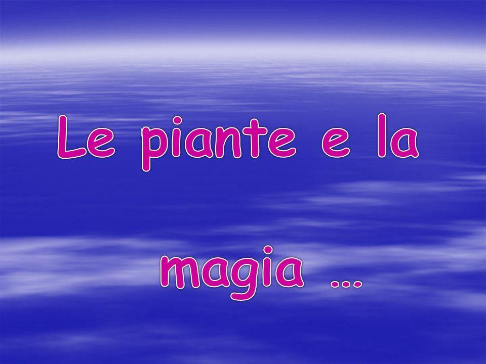 Le piante e la magia …