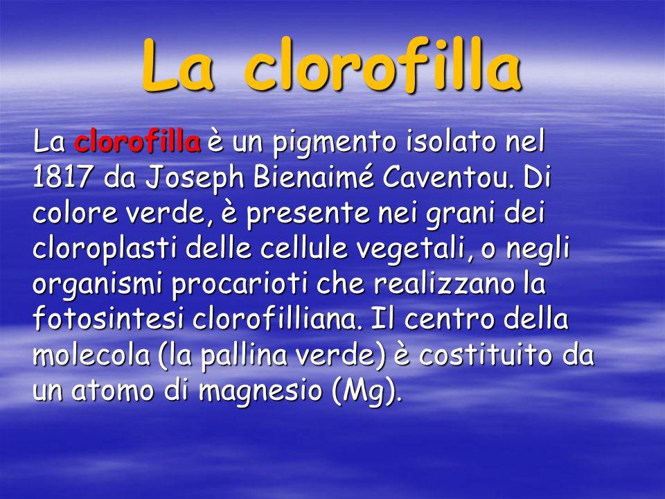 La clorofilla