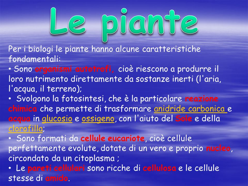 Le piante Per i biologi le piante hanno alcune caratteristiche fondamentali: