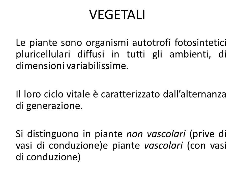 VEGETALILe piante sono organismi autotrofi fotosintetici pluricellulari diffusi in tutti gli ambienti, di dimensioni variabilissime.