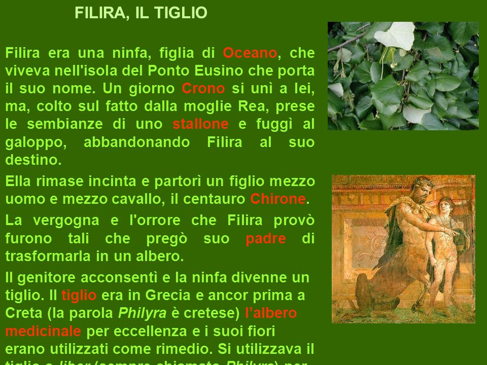 FILIRA, IL TIGLIO