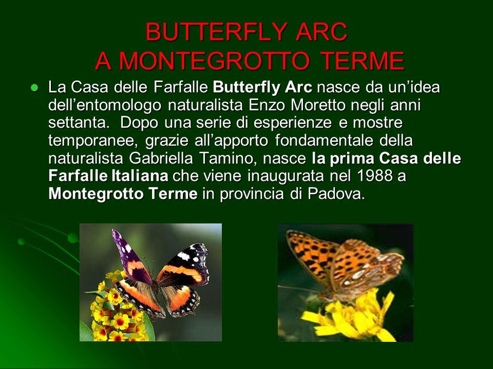 BUTTERFLY ARC A MONTEGROTTO TERME