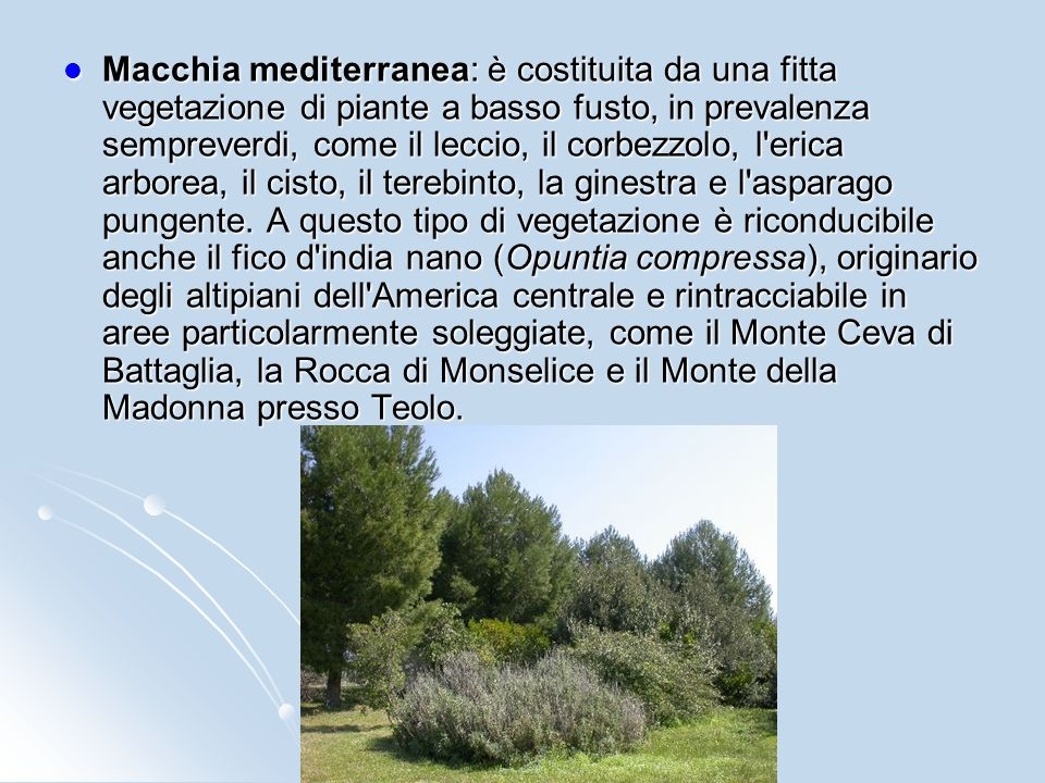 Macchia mediterranea: è costituita da una fitta vegetazione di piante a basso fusto, in prevalenza sempreverdi, come il leccio, il corbezzolo, l erica arborea, il cisto, il terebinto, la ginestra e l asparago pungente.