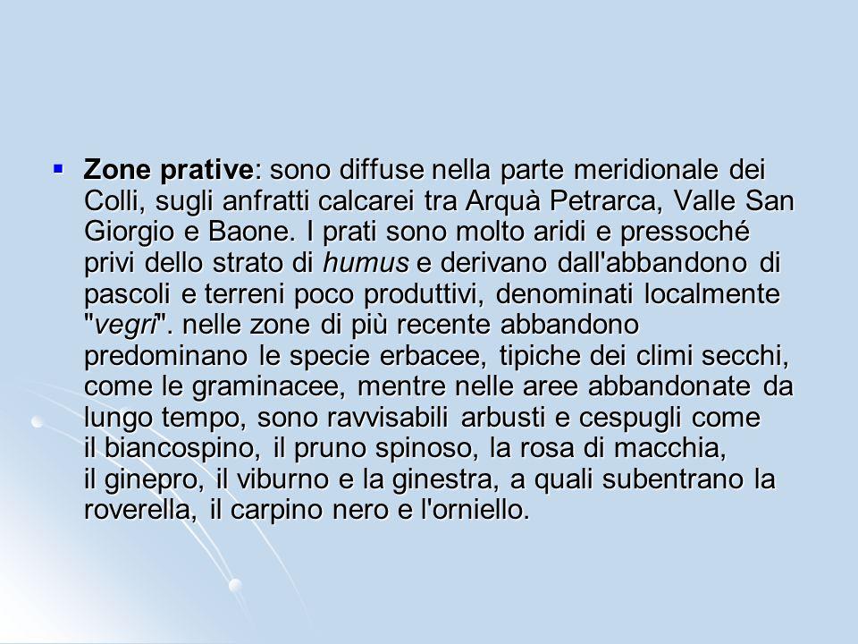 Zone prative: sono diffuse nella parte meridionale dei Colli, sugli anfratti calcarei tra Arquà Petrarca, Valle San Giorgio e Baone.
